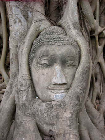 Buddha head with Bodhi tree roots embracing it, Ayutthaya, Thailand