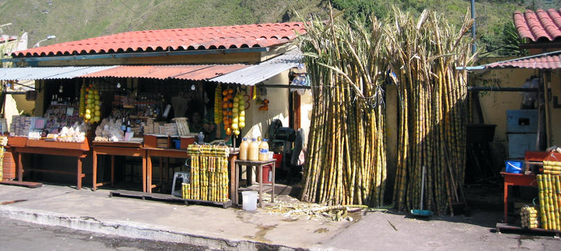 SUGAR CANE, CANE JUICE AND TAFFY FOR SALE