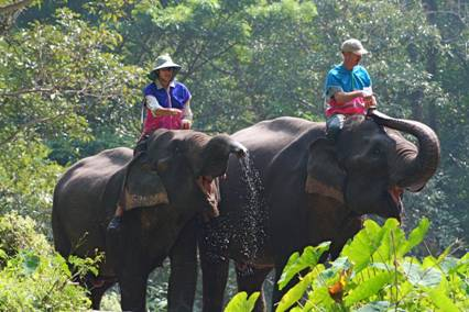 Helen and Drake riding elephants in Asia