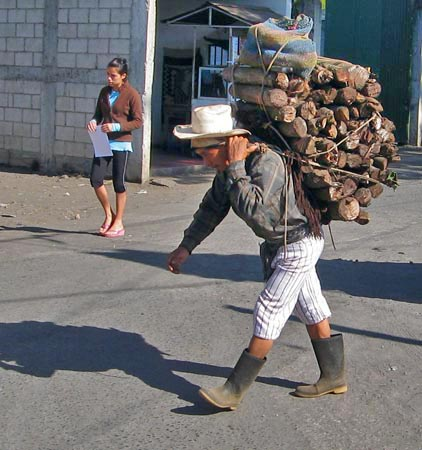 Almost daily we see the Maya transport firewood on their backs