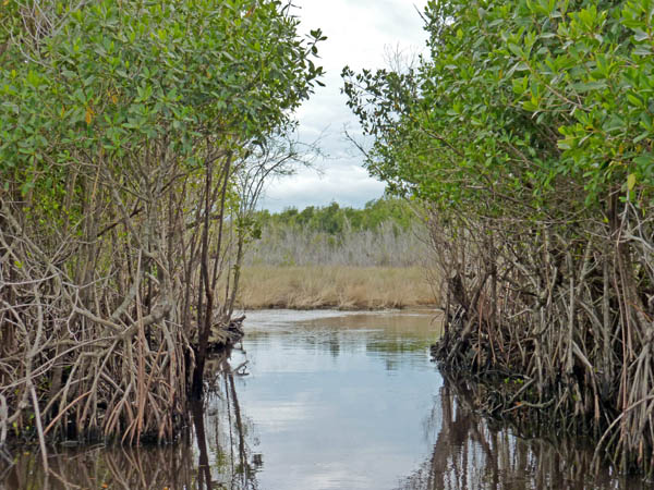 From the mangrove forest to the sawgrass prairies