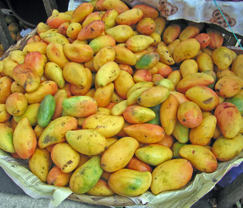 Mangos! A tropical treat
