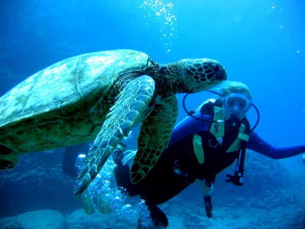 Scuba diving in Hawaii, USA