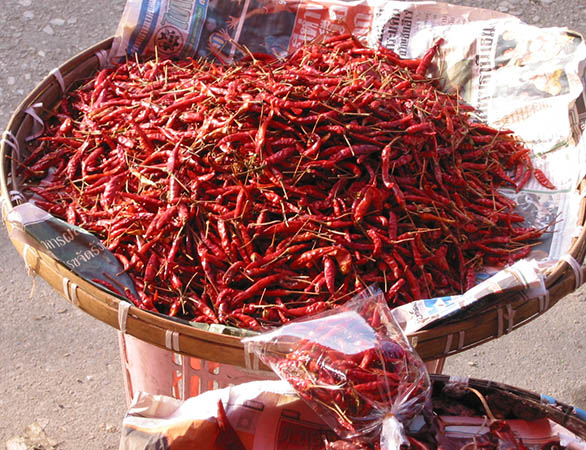 These little chilies are hot hot hot!