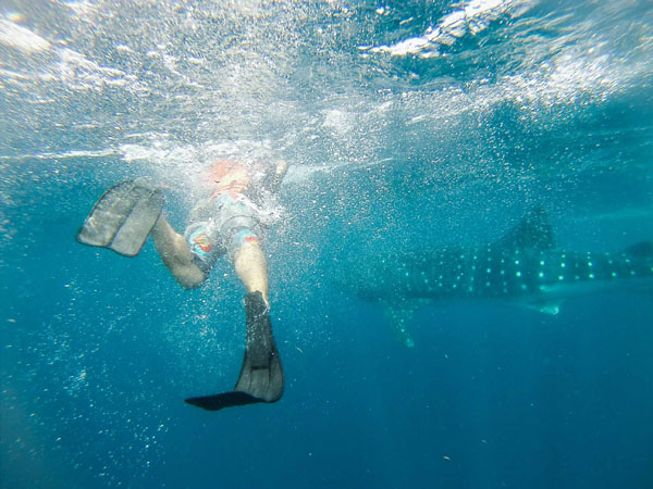Jeremy swimming with whale sharks in Isla Mujeres, Mexico